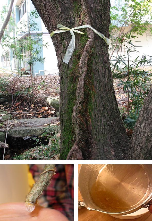 写真/奈良女子大学大学院人間文化研究科組織的な大学院教育改革推進プログラム「女性の高度な職業能力を開発する実践的教育」(平成20年度~22年度)国際社会文化学専攻
